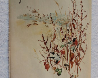 Vintage Botanical Book Page - November - Bullfinch  -  Nature Notes of an Edwardian Lady - Edith Holden - Country Diary