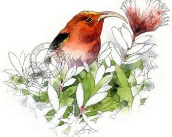 Iiwi watercolour - bird art, wildlife art - nature print of original artwork