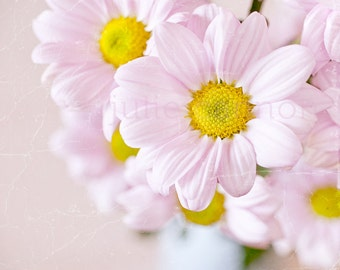 Pink Daisy Photography -  Shabby Chic - Spring -  Flower Print -   Soft Pastel Tones  - Pastel Pink -  Fine art for your home
