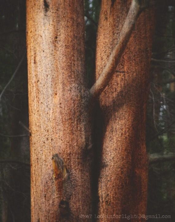 Tree Photo   Abstract Nature Photo   Minimalist Tree Art   Brancusi Inspiration   Texture Photo   Abstract Tree   Tree Embrace   The Kiss