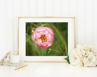 Fine Art Floral Photography - Pink Peony Photo Print - Spring Flower - 11x14 Peony Picture - Nature Photograph - Girl Bedroom Decor