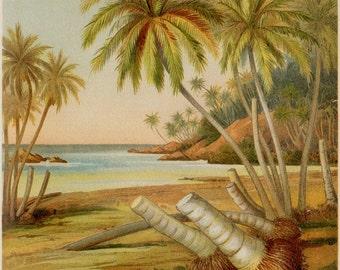 1890 Old botanical print. Beach plants, Plants, shore.