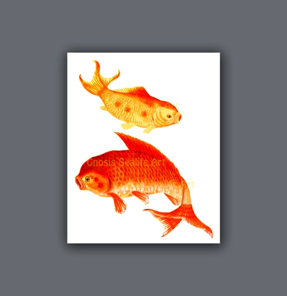 Koi painting goldfish wall art print 7 symbol for love red for Koi wall art