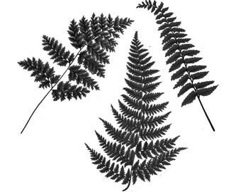 """Vintage Botanical Fern Temporary Tattoo - """"Fernetic - B & W"""""""