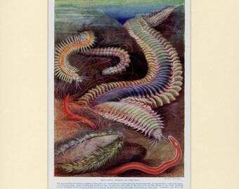 "Matted Antique Sea Worm Print C. 1900 Ocean Marine Sea Life Lithograph 11x14"""