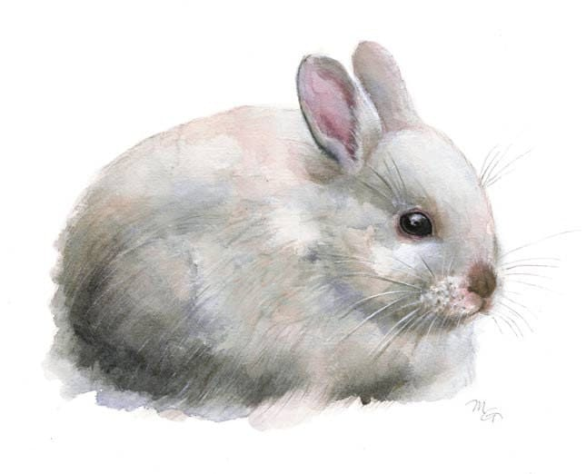 essay on rabbit for kids Rabbit facts for kids | amazing facts about rabbits for kids here are some of the rarely known rabbit facts for kids including rabbits diet, habitat, reproduction and different types rabbits are the small mammals that belong to the family of leporidae with the order lagomorpha.