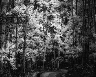 Aspens trees photo, Colorado art, aspen tree wall art, Black White photo, road path art, rustic wall decor, log cabin decor, nature art