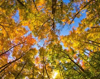 Spectacular Fall Colors in Algonquin Park Ontario Canada