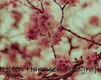 Pink Blossom -  art print