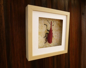 3D Wall art | Faux Taxidermy Shadow box | Weevil | entomology