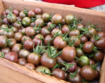 30+ Chocolate Cherry Tomato Seeds- Heirloom Variety
