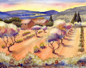 Olive Grove, Italy