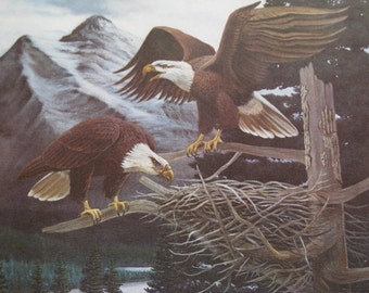 """Vintage 1960's Art Print """" Eagle's Nest """" by Randy Charlesworth 2 Eagles High in Mountain Forest Building a Nest Mint Condition."""