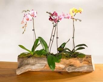 Elm Log Flower Pot