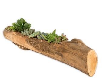Elm Log Rustic Flower Pot II