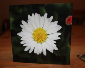 Daisy Greeting Cards Pack of 5