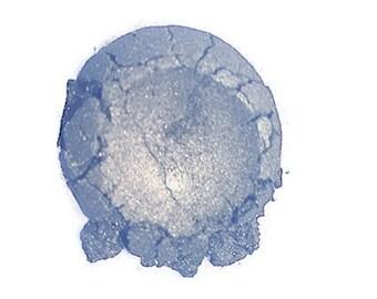 Drops Of Jupiter Mineral Eyeshadow 10 gm