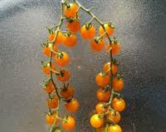 Golden Currant Tomato seeds