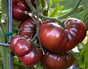 Black Krim Tomato seeds
