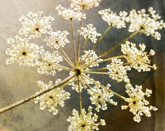 Delicate Lace Flower, Fine Art Print