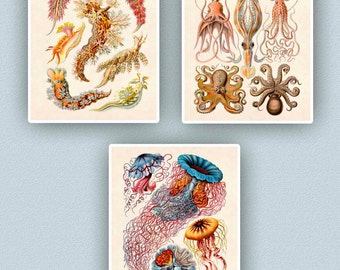 Nautical art, Sea life prints, Nautical  jellyfish, cephalopods, nudibranchia, 3 Seaside Prints, Coastal art, beach cottage decor, 11x14