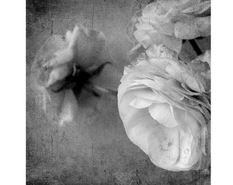 Black and White Photography,  Flower Print, Ranunculus Photograph, Floral Art Print, Flower Wall Decor
