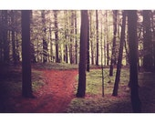 Dark Forest Photograph, Nature Photography, Woodland, Home Decor, Ethereal, Path, Woods, Trees Photo, Fairytale, Dreamy Fine Art Print
