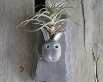 Air Plant Bunny Plaque