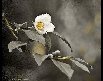 Black & White Flower Photography, modern, grey and yellow, wall art, as seen at the 2013 Oscar's GBK Gift Lounge