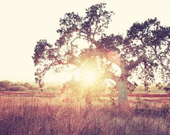 "Landscape photography - oversized art - rust brown gold decor - autumn tree wall art ""Into the Light"""