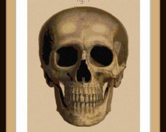 Antique Skull Front View cross stitch pattern pdf Anatomical Human Skull