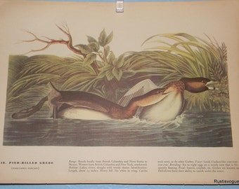 Vintage Plates from The Birds of America, Book by John James Audubon Copyright 1942