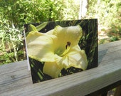 Pale Yellow Daylily Greeting Card - Yellow Flower with Dew Drops All Occasion Blank Card