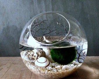 Moss Ball Orb / Aquarium Moss Bowl Biosphere Kit