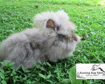 Chocolate English Angora Wool Angora Fiber Rabbit Fur Fibers Raw Hershey Mint Natural Hair No Fillers Cruelty Free Spinning Fiber / 1 Ounce