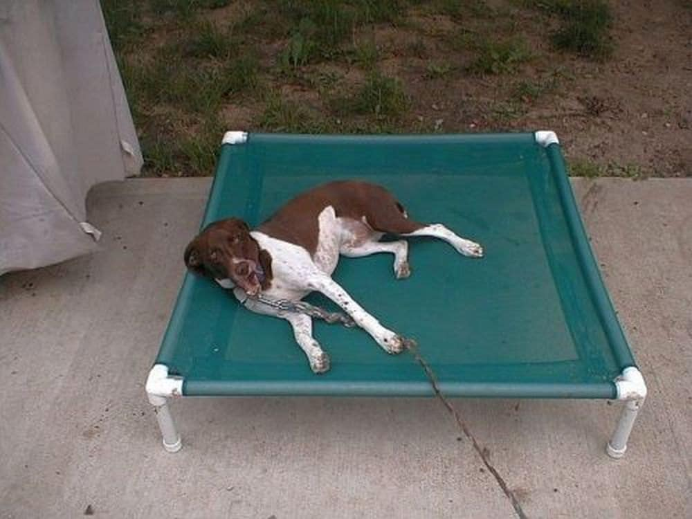 zoom - Elevated Dog Beds
