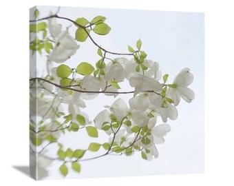 "White Dogwood Flower Photo ""Dogwood Reaching"" Spring Flower Nature Photography, Dogwood Photo Dogwood Print Dogwood Art, Canvas Gallery Wrap"