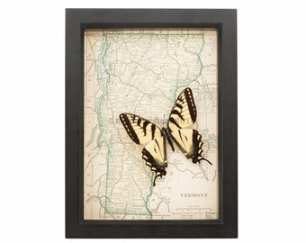 Old Framed Map Vermont with Tiger Swallowtail