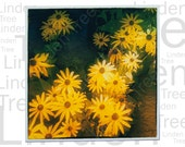 Yellow Daisies In Autumn & Vintage Text Greeting Card. Unique design