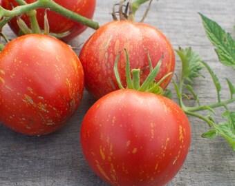 Cascade Lava Tomato Seeds