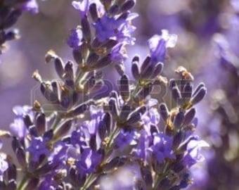 Lavender All Natural Botanical Perfume