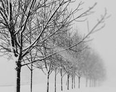 Winter Landscape Photograph, Fine Art Nature Print, Let it Snow, Bare Trees, Snow Storm, Black and White Print, 8x10, 11x14, 16x20, 20x24