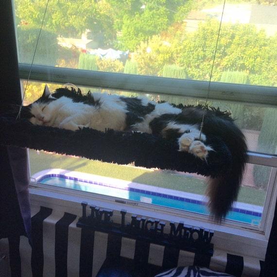 black faux fur curious cats window perch