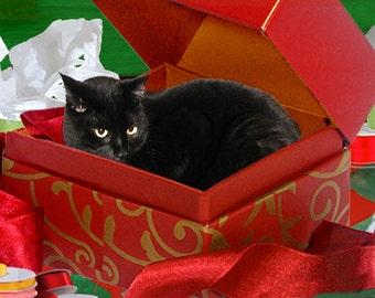 Black Cat Christmas Card, Handmade, Cat in a Box, Holiday Greeting Cards, Whimsical Art, Deborah Julian