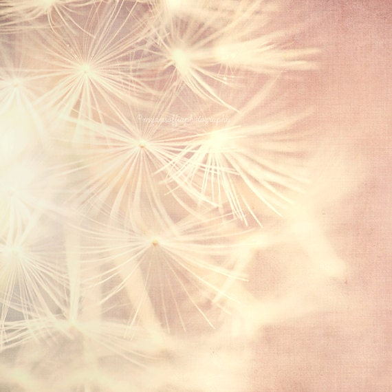 dandelion wall art, baby nursery wall art, pink girls room decor, nature print, romantic, white, dandelion seeds photo, botanical print