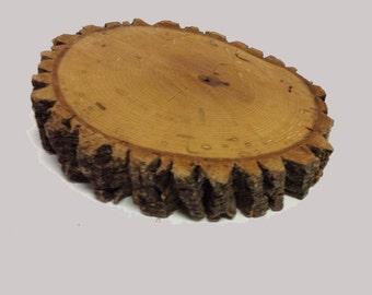 Thick Wood Slab Tree Slice