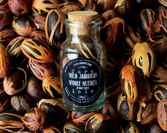 Fare Isle Wildcrafted Jamaican Whole Nutmeg in Mace Shell