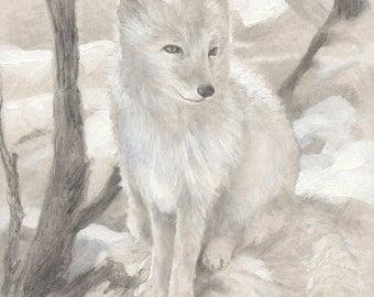 Arctic Fox 8.5x11 signed print
