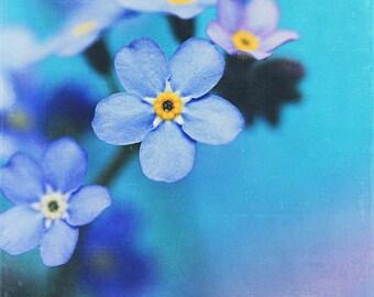 Nature Photograhpy: Beautiful Dreamer Fine Art Photography Blue forget me not wall art botanical art print still life wall decor Spring