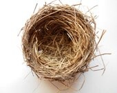 Real bird nest  Northern Missouri Teaching aid Wreath decoration Photo prop  Wedding decor Baby shower Centerpiece Wildlife Nature  GL1